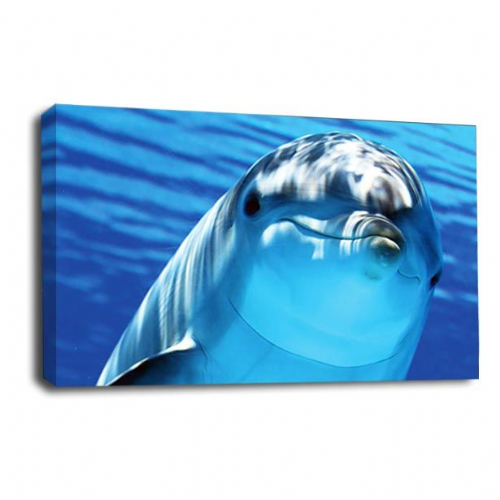 Dolphin Swimming Canvas Art Wall Art Picture Print